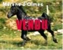CAMPIUN DE ROQUEBRUNE: Etalon Approuvé