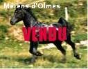 DIONYSOS D'OLMES: Hongre dressé selle