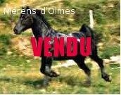 VANILASKY D OLMES : Pouliche